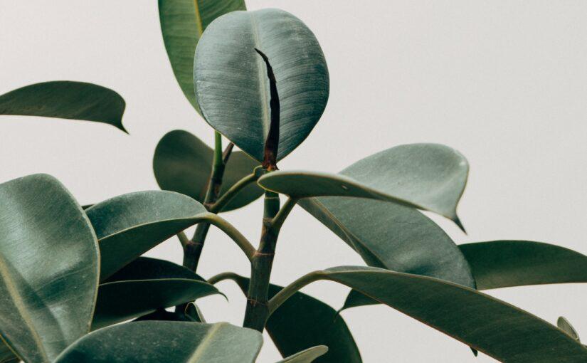 2 råd til de bedste træer og planter i hjemmet
